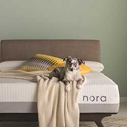 Wayfair Nora mattress